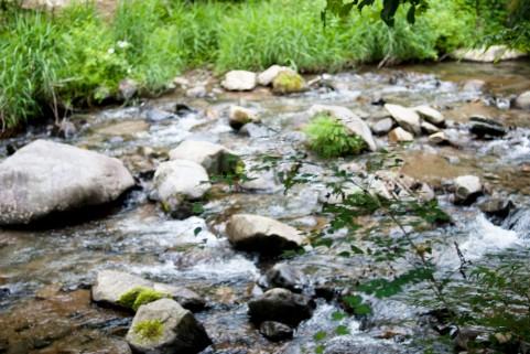 水のふるさと道志の森基金への支援